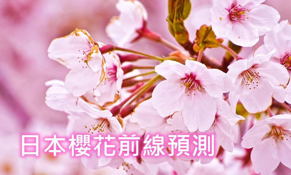 2020日本櫻花前線開花滿開預測(3/12更新)~日本最新櫻花開花時間已公布