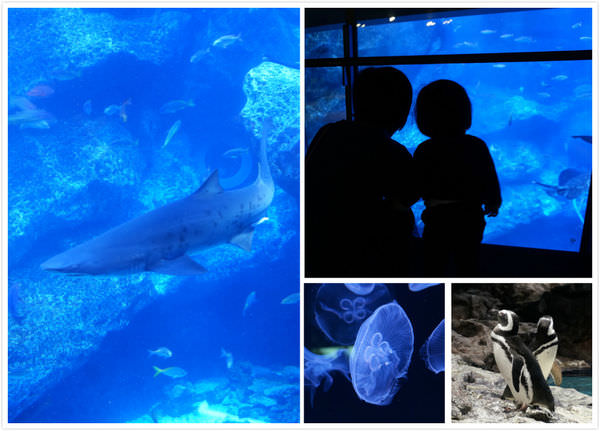 [東京親子景點]晴空塔墨田水族館,東京水族館推薦,超療癒的大水族箱
