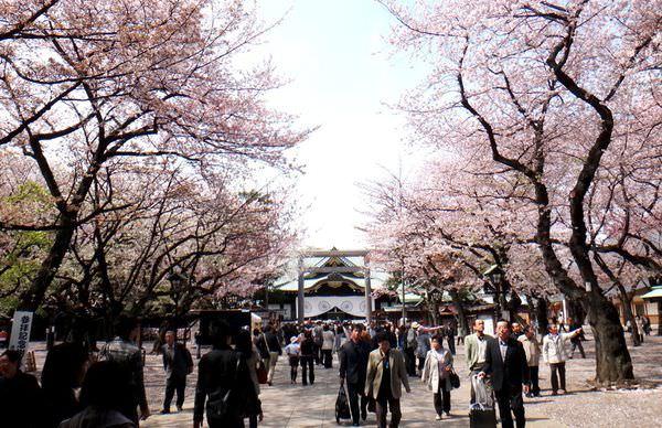 靖國神社櫻花