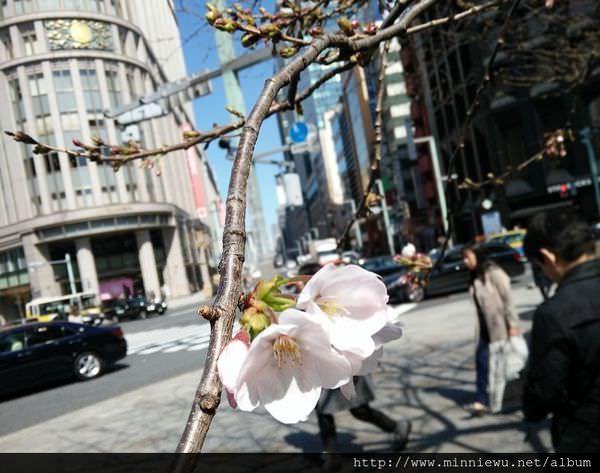 sakurapic170324.jpg