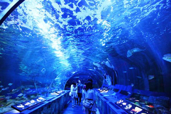 東京親子景點品川水族館