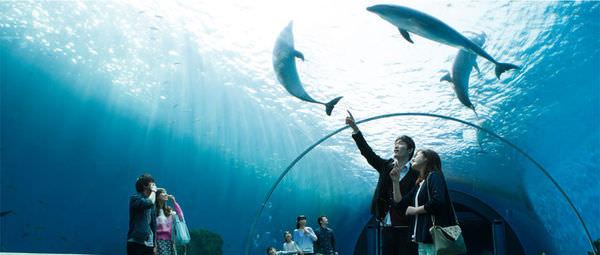 東京親子自由行景點橫濱八景島海島樂園