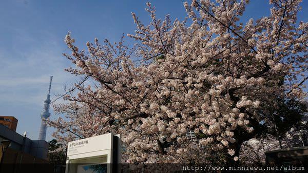 錦系公園櫻花