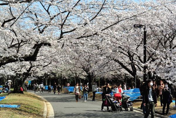 東京代代木公園賞櫻
