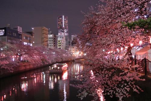 橫濱賞櫻景點大岡川