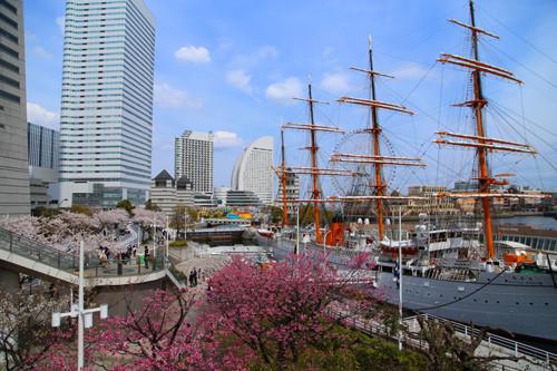 橫濱賞櫻景點さくら通り・汽車道