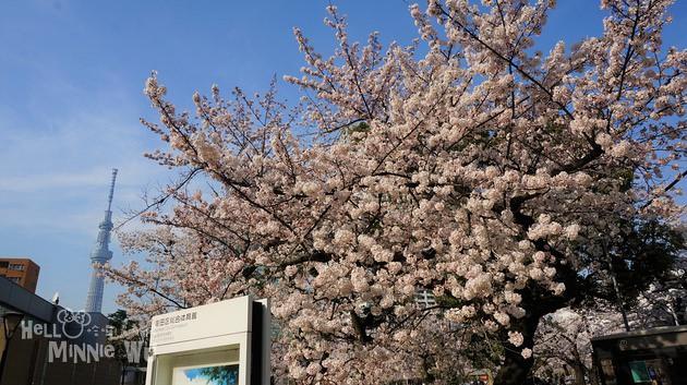 [東京賞櫻景點]錦糸町錦糸公園,意外發現的東京賞櫻好去處